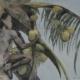 Coconut III