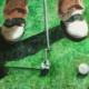 Golfe VI